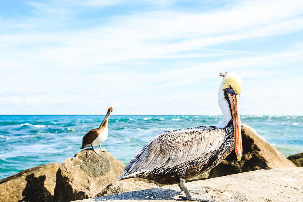 USA Trip - Florida - Teil 2  USA Trip - Florida - Teil 2  USA Trip - Florida - Teil 2  USA Trip - Florida - Teil 2  USA Trip - Florida - Teil 2  USA Trip - Florida - Teil 2  USA Trip - Florida - Teil 2  USA Trip - Florida - Teil 2  USA Trip - Florida - Teil 2  USA Trip - Florida - Teil 2  USA Trip - Florida - Teil 2  USA Trip - Florida - Teil 2  USA Trip - Florida - Teil 2  USA Trip - Florida - Teil 2  USA Trip - Florida - Teil 2  USA Trip - Florida - Teil 2  USA Trip - Florida - Teil 2  USA Trip - Florida - Teil 2  USA Trip - Florida - Teil 2